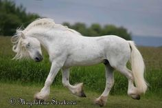 The Boulonnais also known as the White Marble Horse is a draft horse breed It is known for its large but elegant appearance and is usually gray although Big Horses, Horses And Dogs, White Horses, Horse Love, Draft Horse Breeds, Draft Horses, Most Beautiful Horses, All The Pretty Horses, Pretty Animals