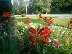 Crocosmia is one of my favorites!