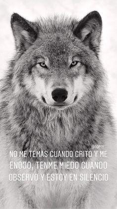 Mas q la verdad!!! Amazing Quotes, Great Quotes, Alpha Romeo, Ariadne Diaz, John Constantine, Positive Phrases, Wolf Quotes, Names Of God, Wolf Tattoos