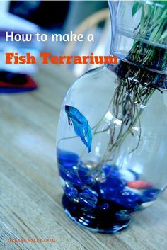 How to make a fish terrarium by @drkarenslee