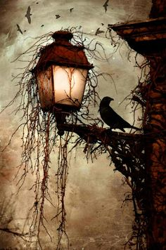 A LIGHT IN THE TO KEEP AWAY THE FRIGHT, EXHALE FROM TARA SHACKELFORD