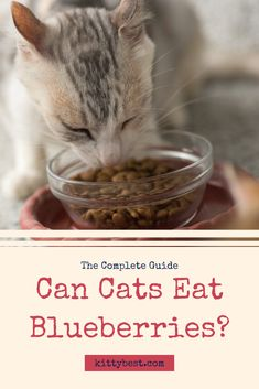 Getting your cat's diet right is an important part of giving him or her a happy and healthy life. Here we answer the question: what can cats eat? Cat Love Quotes, Cat Toilet Training, Cat Diet, Cats For Sale, Balanced Diet, Cat Food, Yummy Treats, Dog Food Recipes, Healthy Life