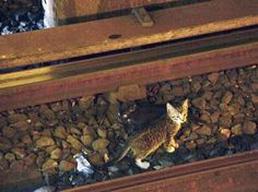 The Metropolitan Transportation Authority suspended subway service on the B and Q lines for nearly two hours yesterday in search for two kittens who were spotted on the tracks at Church Ave in Brooklyn.