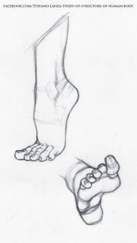 Exceptional Drawing The Human Figure Ideas. Staggering Drawing The Human Figure Ideas. Human Body Drawing, Human Figure Drawing, Figure Drawing Reference, Art Reference Poses, Anatomy Sketches, Anatomy Drawing, Anatomy Art, Art Drawings Sketches, Feet Drawing