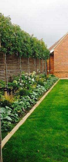 Lime trees under planted with fresh green and white planting Timber Garden Edging, Landscape Timber Edging, White Garden Fence, Garden Border Edging, Green Fence, Landscape Plans, Landscape Design, Planting For Privacy, Hedges For Privacy