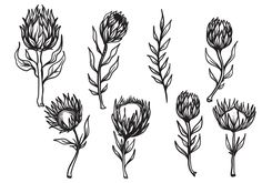 Set of Hand Drawn Protea Flower Vector. This illustrations are best fit for vintage or classics design theme. GET IT FOR FREE :) Protea Art, Flor Protea, Protea Flower, Botanisches Tattoo, Dog Tattoos, Body Art Tattoos, Afrika Tattoos, South African Flowers, Skull Tattoo Flowers