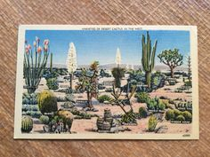 Vintage 50's Postcard  Varieties of Desert by ElkHugsVintage