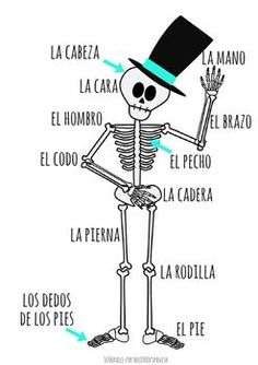 """Cute poster for your room with 12 Spanish body parts labeled on a Day of the Dead skeleton. Great visual reminder! Look for Label the Skeleton and """"What's Missing?"""" activities in my TpT store."""