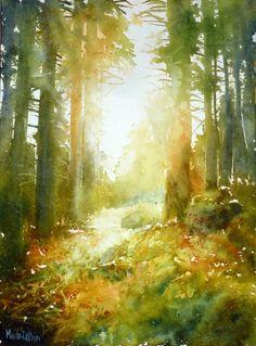 clairière dans les Vosges