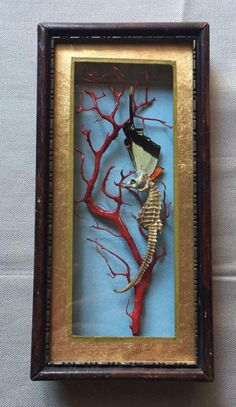 hippocampus  butterfly  coral in box frame