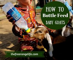 Do you have a mother who has rejected her kids? Learn how to bottle feed a goat and still have healthy and thriving babies!