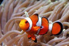 En ik vond hem voor een aquarium met zeeanemonen en clownvissen. Blz 85