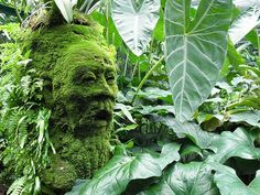 Singapore Botanical Gardens- man face!