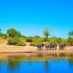 Südafrika, Simbabwe und Botswana Rundreise: Die Perlen Afrikas  http://www.africa-royal-tours.de/rundreise-suedafrika-simbabwe-botswana/