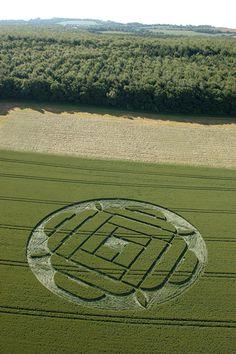 West Woods, Lockeridge, Wiltshire, England. 22nd June 2005, Wheat OH.