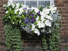 Very pretty combo in this window box