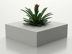 Concrete Flower pot SQUARE