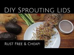 Sprouting, Microgreens, & DIY Rust Free Lids for Pennies - YouTube