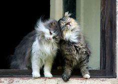 Kitty love;)