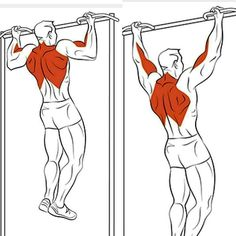 Killer Back Workout. For see more of fitness life images visit us on our website ! Muscle Fitness, Fitness Diet, Mens Fitness, Female Fitness, Workout Fitness, Health Fitness, Killer Back Workout, Fitness Bodybuilding, Back Exercises
