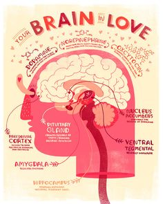 Etsy の Your Brain in Love: Anatomy Poster by Rachelignotofsky