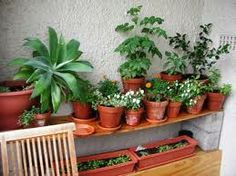 balcony garden design - i'd paint the cinderblock , but just narrow enough for our narrow landing