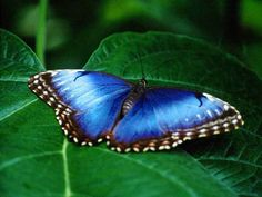 Google Image Result for http://3d-screensaver-download.com/images/free-butterfly-screen-saver/big2.jpg