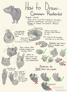 How To Draw Common Rodents! by IchiUchi