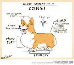 Anatomy of a Corgi  @Cassandra Dowman Guild Franco Pumarejo