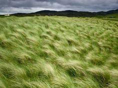 Beach Grass, Escócia