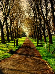Such an inviting path!!! I'm going for a stroll here in my mind right now... hm, or maybe horseback riding! hehee