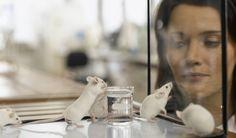 Logran revertir pérdida de memoria en ratones con Alzheimer