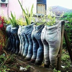 These plants are made for walkin' What funny pun can you think of?! We would LOVE to hear them