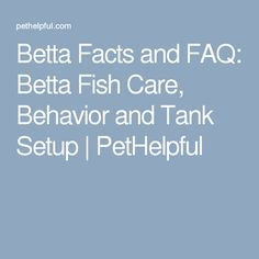 1000 ideas about betta fish care on pinterest fish care for Betta fish personality