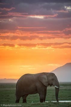 Ambosili sunset Kenya, Africa. #travel-paradise divine, africa