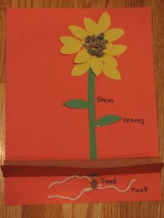 "sunflower plant part craft to teach parts of a flower. Great follow up to Eric Carle's ""The Tiny Seed"" @Erin B B B Edell"