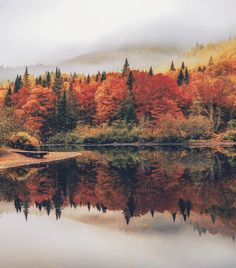 Autumn in Canada ig: ✧☼ ☾↣☆↢☽☀︎desert palms wanderlust travel woods forest bucketlist mountains lake clouds hike nature woodlands wanderlust. Nature Photography Flowers, Tumblr Photography, Landscape Photography, Travel Photography, Forest Photography, Flowers Nature, Adventure Photography, Spring Photography, Landscape Photos