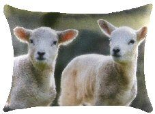 Pinky And Perky Lambs Cushion Sheep Crafts, Sheep And Lamb, Printed Cushions, Lambs, Presents, Gifts, Animals, Ideas, Decor