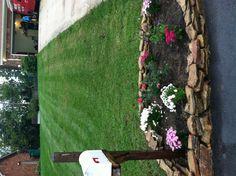 Mums & rose garden around mailbox