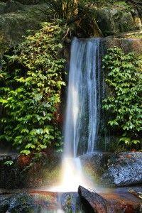 NSW (Australia) rainforests