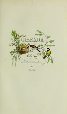 Frontispiece for 'Oiseaux d'Europe' by Florent Prevost and C. L .Lemaire. Published by F.Savy. Biodiversity Heritage Libra...