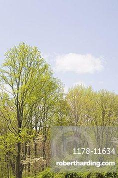 #Spring #woodland