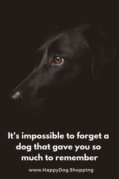 Dog Quotes Love and Loyalty HappyDog.Shopping - Funny Dog Quotes - Dog Quotes Love and Loyalty HappyDog.Shopping The post Dog Quotes Love and Loyalty HappyDog.Shopping appeared first on Gag Dad. Best Dog Quotes, Puppy Quotes, Dog Quotes Love, Dog Quotes Funny, Animal Quotes, Funny Dogs, Dog Loyalty Quotes, Quotes About Dogs, Dog Qoutes
