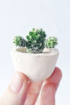 A tiny planter for your tiniest of plants