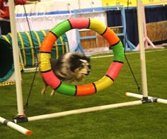 WoofJocks at the All About Pets Show! | Talent Hounds