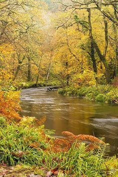 ˚Autumn - Dartmoor National Park, England