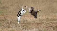 草の中で飛ぶ2匹の猫 壁紙 - 1920x1080 フルHD