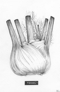 Title: 'Fennel' Client: SLA Type: drawing / tattoo design / illustration Year: 2013 #foodart #kitchenart