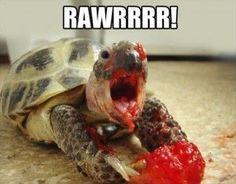 Turtle raspberry rawr!