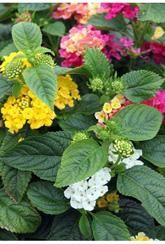 Search results for lant Hanging Baskets, Outdoor Living, Living Spaces, Vibrant, Patio, Create, Search, Plants, Style